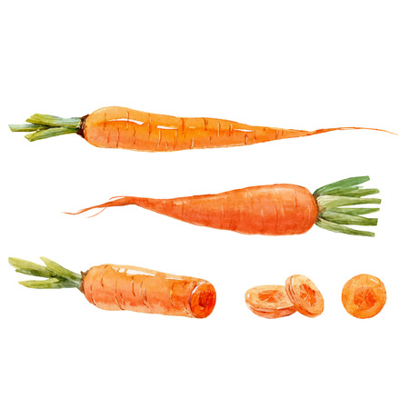Watercolor carrot vector set Stock Illustratie