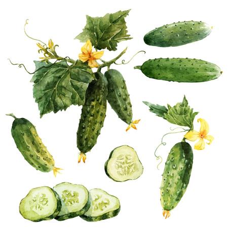 Ensemble de vecteur de concombre aquarelle
