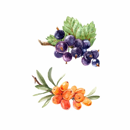 Watercolor berries vector set Illustration