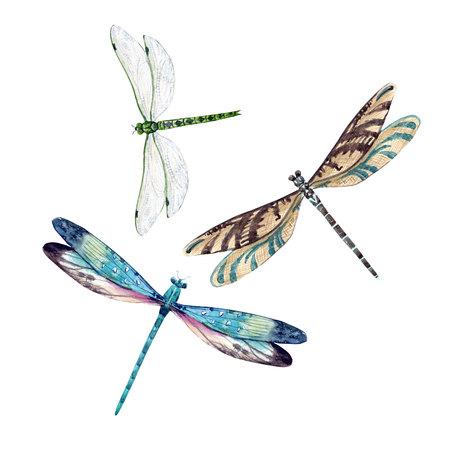 Watercolor dragonfly set Standard-Bild