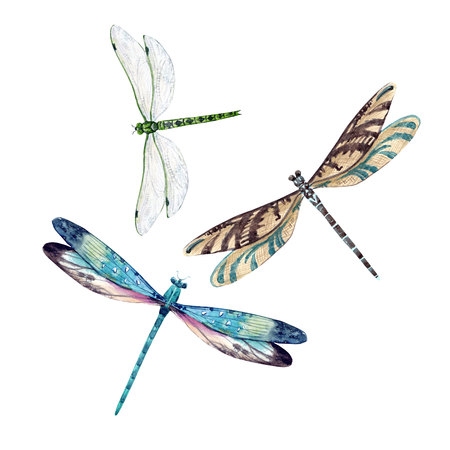 Watercolor dragonfly set 스톡 콘텐츠