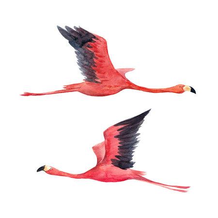 Watercolor flamingo illustration Foto de archivo - 103795503