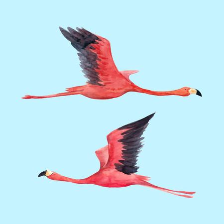 Watercolor flamingo vector illustration Foto de archivo - 104077431