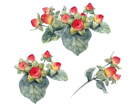 Watercolor hypericum berries Stock Photo