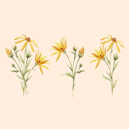 Watercolor topinambur illustration Stockfoto