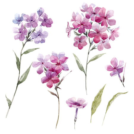 Watercolor phlox flowers Stock Photo