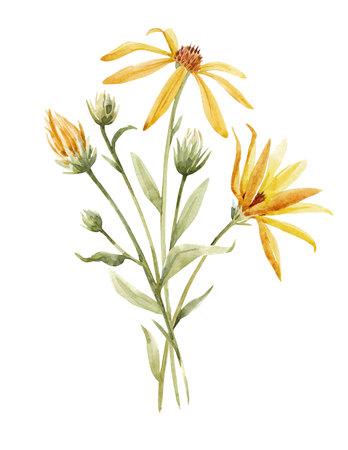 Watercolor topinambur illustration Zdjęcie Seryjne