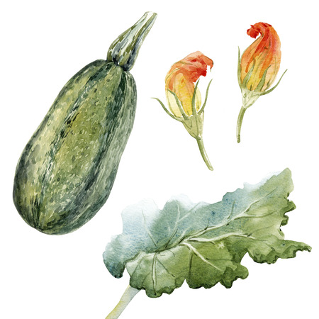 Watercolor zucchini set