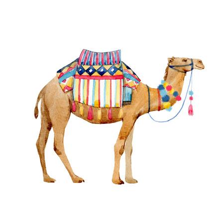 Watercolor camel illustration Stock Photo