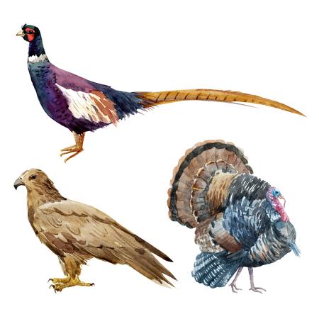 Watercolor pheasant eagle turkey illustration