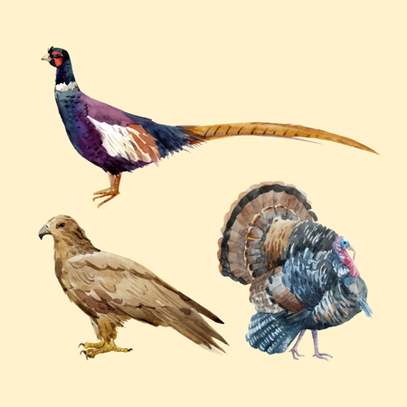 Beautiful vector set with watercolor pheasant eagle turkey illustrations