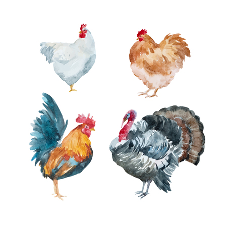 Beautiful vector set with watercolor chicken, rooster, turkey Vetores