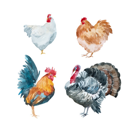 Watercolor vector chicken, rooster, turkey