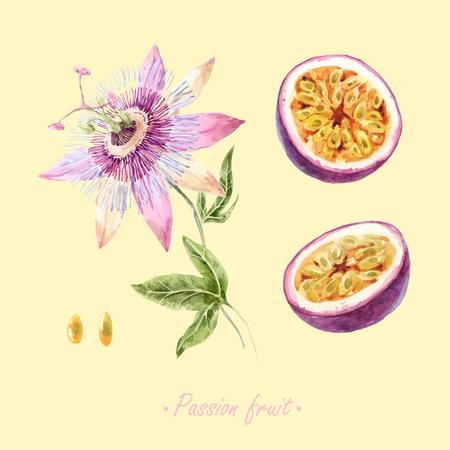 Bellissimo set vettoriale con frutto della passione e fiori disegnati a mano
