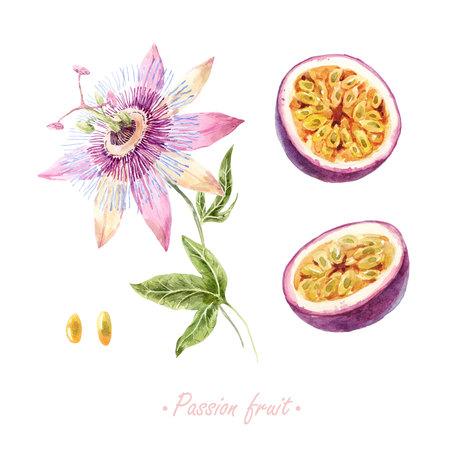 Set di frutti della passione dell'acquerello