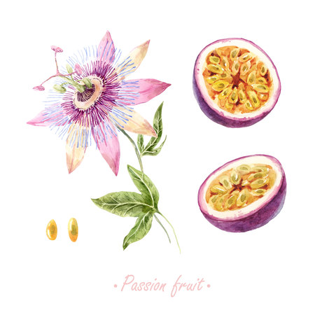 Watercolor passion fruit set
