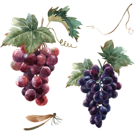 Watercolor grape set