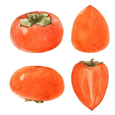 Watercolor persimmon illustration