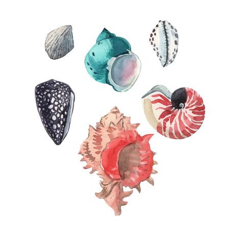Watercolor shells vector set
