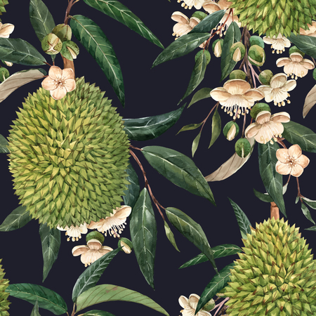 Watercolor durian tropical vector seamless pattern Illustration
