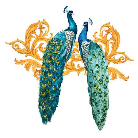 Watercolor peacock composition