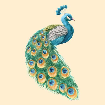 Hermosa ilustración vectorial con pavo real acuarela dibujada a mano