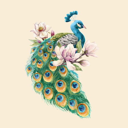 Beautiful vector illustration with hand drawn watercolor magnolia flowers and peacock Illustration