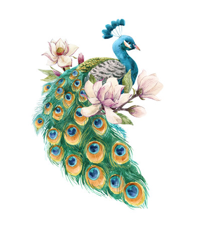 Watercolor peacock illustration Stock fotó - 117117990