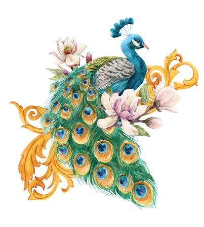 Watercolor peacock illustration
