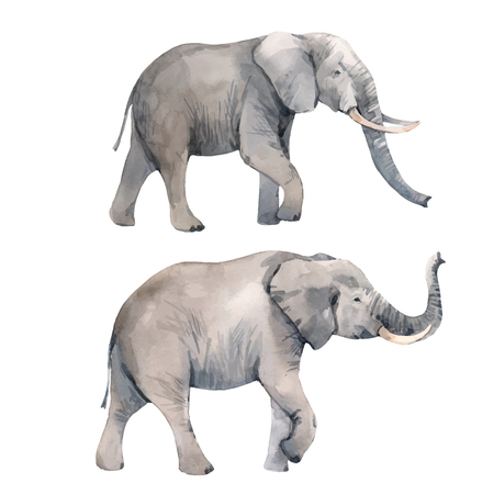 Illustrazione vettoriale di elefante dell'acquerello
