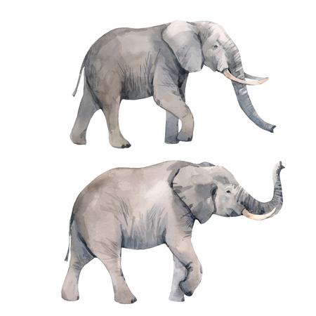 Ilustración de vector de elefante acuarela