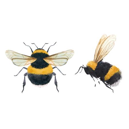 Belles illustrations vectorielles avec insecte guêpe abeille bourdon aquarelle