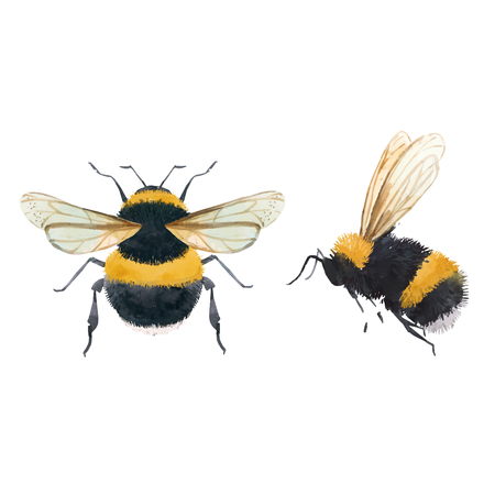 Schöne Vektorgrafiken mit Aquarell Hummel Biene Wespe Insekt
