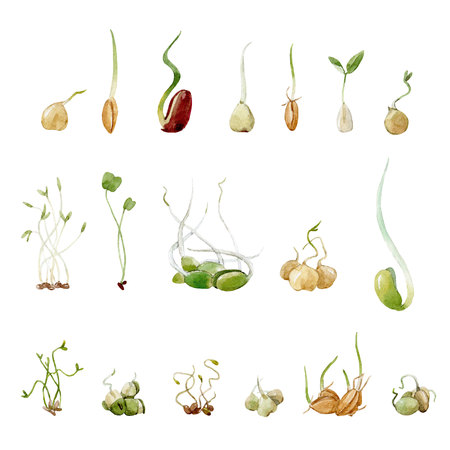 Watercolor beans peas seeds sprouts set