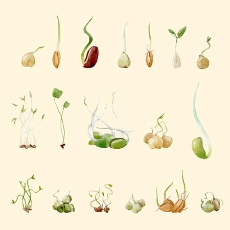 Schönes Set mit Sojabohnen Erbsen Samen Sprossen Salat vegetarisches Essen Illustrationen Vektorgrafik