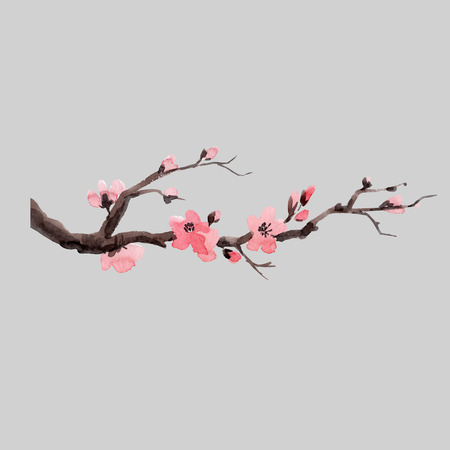 Beautiful vector illustration with watercolor japanese sakura branch