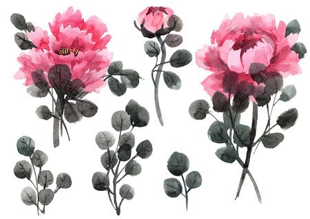 Watercolor chinese rose illustration