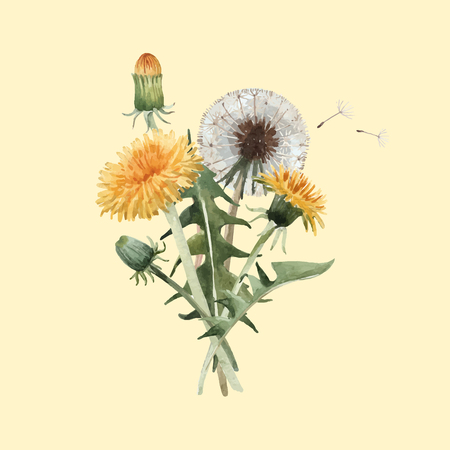 Beautiful vector floral illustration with watercolor dandelion blowball flowers Иллюстрация