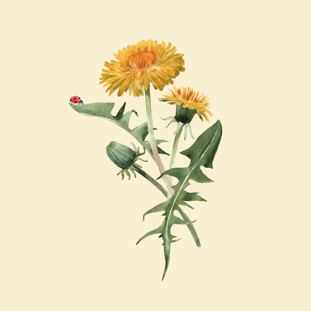Beautiful vector floral illustration with watercolor dandelion blowball flowers Stock Illustratie