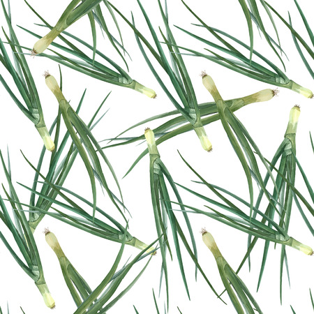 Beautiful vector seamless pattern with watercolor green onion