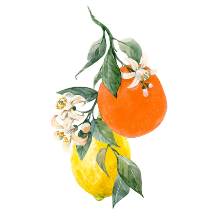 Beautiful vector illustration with watercolor citrus fruits orange lemon