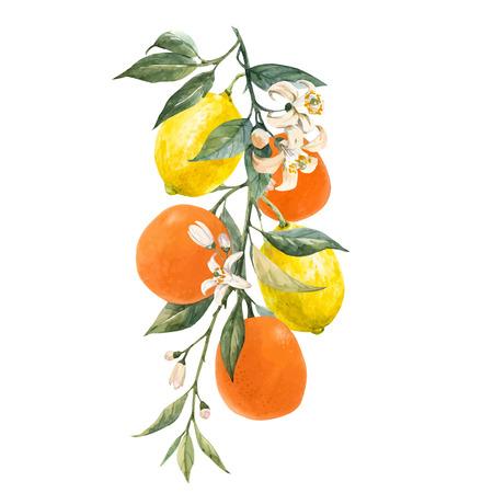 Beautiful vector illustration with watercolor citrus fruits orange lemon