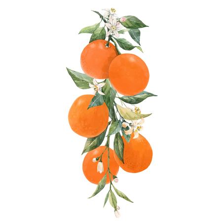 Hermosa ilustración vectorial con acuarela cítricos naranja limón Ilustración de vector