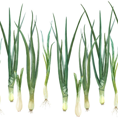 Green onion composition 스톡 콘텐츠 - 123107723
