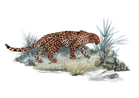 Watercolor jaguar illustration