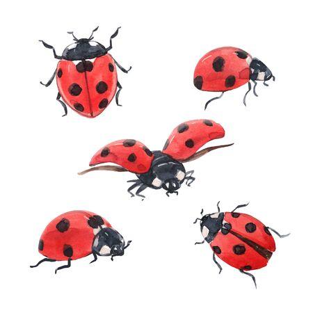 Watercolor ladybug illustration set Stock Photo