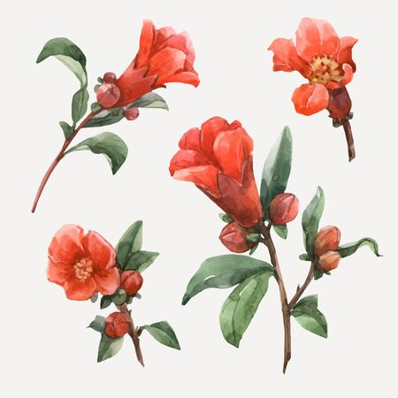 Beautiful vector illustration with watercolor pomegranate orange flowers  イラスト・ベクター素材