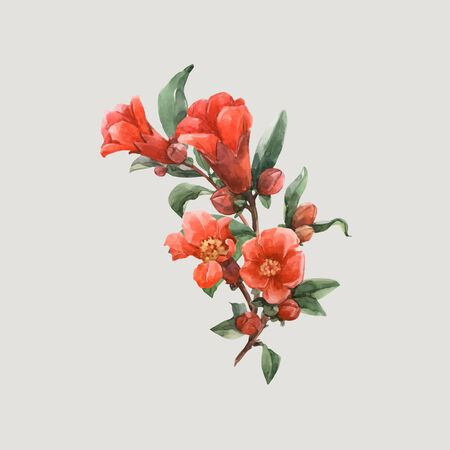 Beautiful vector illustration with watercolor pomegranate orange flowers Illustration