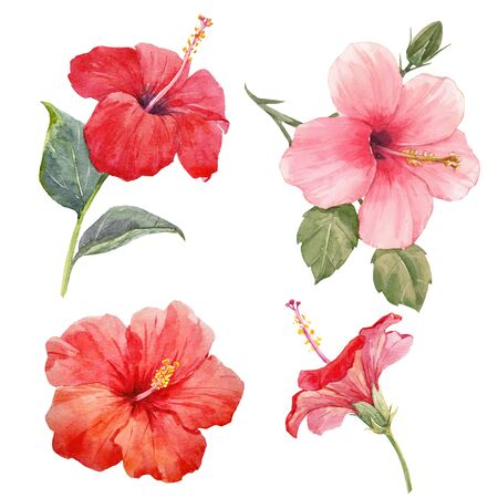 Watercolor hibiscus illustrations set