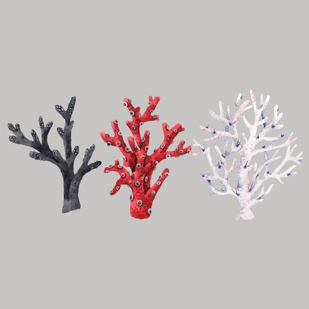 Beautiful vector set with red black white watercolor sea life coral illustrations